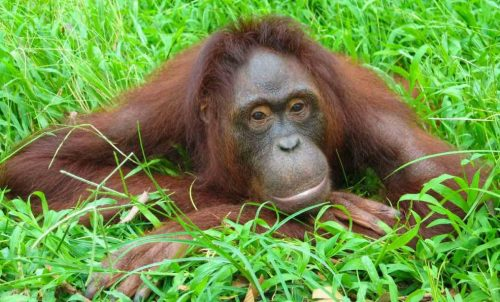 Rimba Raya Becomes First Forest Conservation Project in the World - TRAVELINDEX
